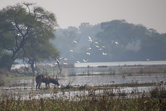 Nationaal Park Keoladeo