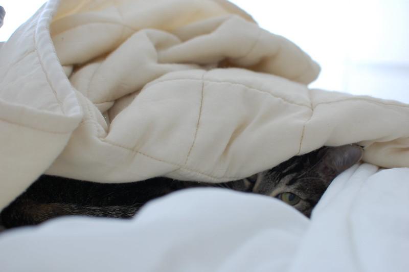 gato edredón