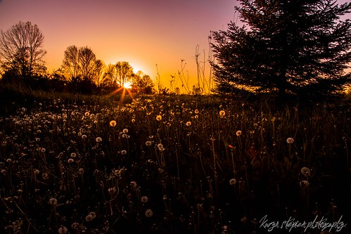 Your Light is Still Shining by Karyn Stepien Photography