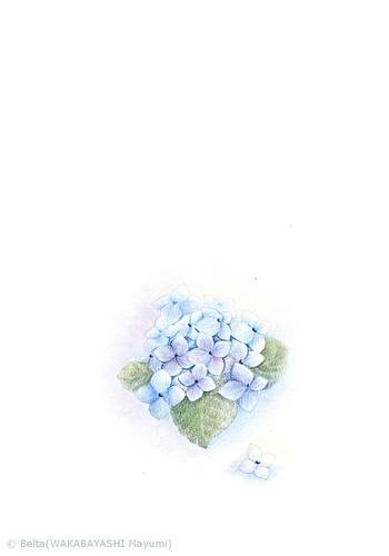 2013_06_12_hydrangea_01_s