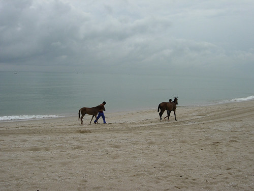 Horses on the beach, Terenganu