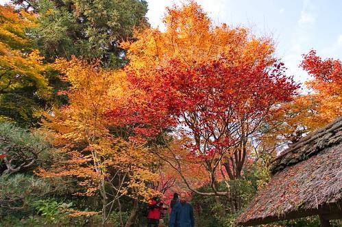 【写真】2012 紅葉 : 厭離庵/2020-10-15/IMGP7828