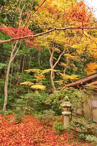 【写真】2012 紅葉 : 祇王寺/2021-09-05/IMGP7861