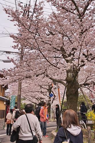 【写真】2013 桜 : 哲学の道/2018-12-24/IMGP9213