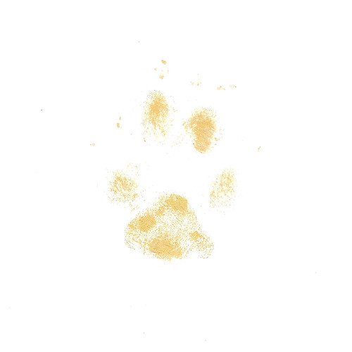 2013-05-21 - Kaylee's Pawprint in Gold Ink