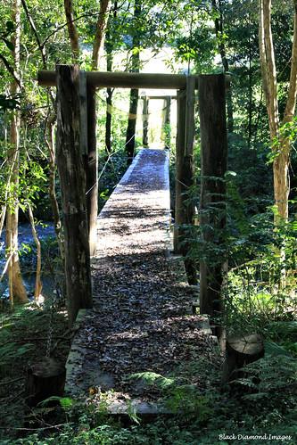 Footbridge Over Lansdowne River, Coxcomb Rd, Upper Lansdowne, Manning Valley, NSW