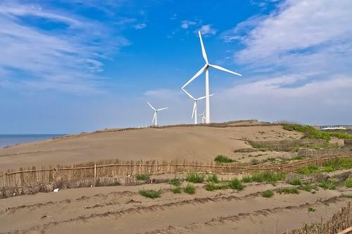 桃園大園鄉的草漯沙丘是台灣著名的沙丘地形。(圖片來源:林務局)