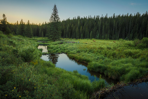 reflection sunrise twilight pond colorado unitedstates meadow evergreen elk beaverpond beavercreektrail
