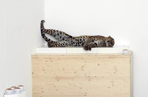 Paola Pivi, Untitled (leopard), 2007