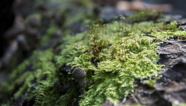 Lichen by Amanda Killen, on Flickr