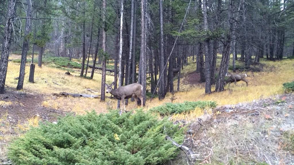Jobsuche, Natur und Thanksgiving in Banff