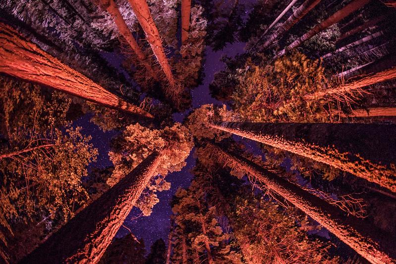 Forest_Oakhurst, CA_G.LHeureux-1414
