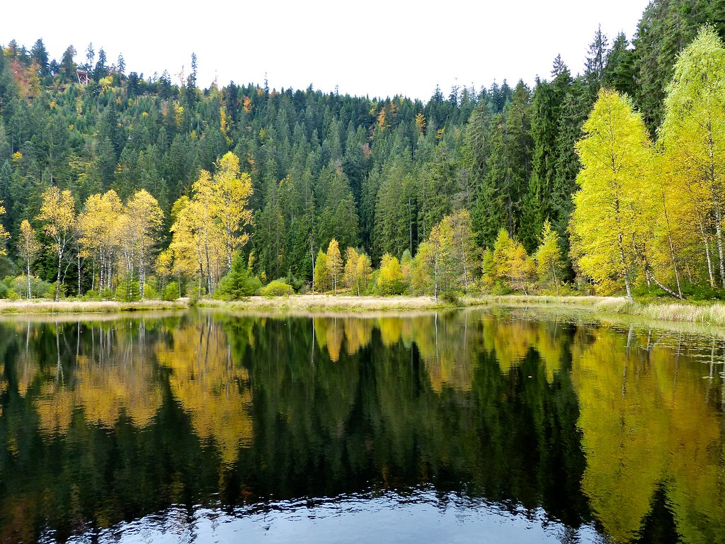 Black Forest: Ellbachsee
