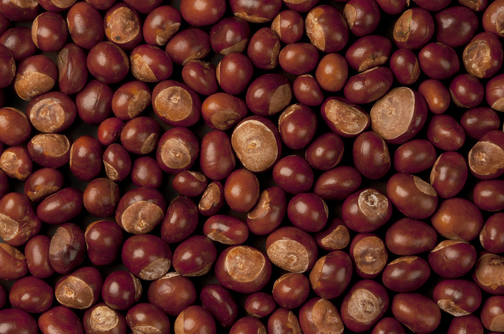 chestnuts nuts, european, roasted