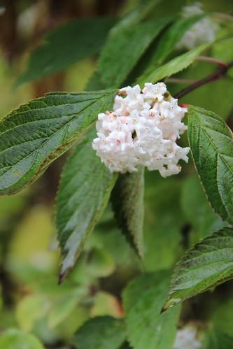131112 Pflanze mit Bluete