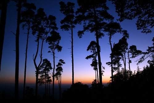 sunset silhouette twilight bluesky somerset bluehour taunton quantocks aonb westbagborough quantockhills lydeardhill willsneck