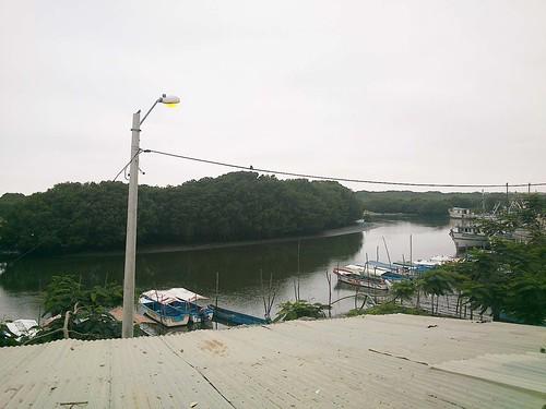 Parte del puerto  con el manglar al fondo