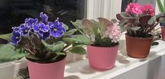 purple(0.0), cyclamen(0.0), floristry(0.0), hyacinth(0.0), flower arranging(1.0), flowerpot(1.0), flower(1.0), violet(1.0), floral design(1.0), plant(1.0), lavender(1.0), pink(1.0),