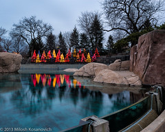 Zoo Lights Sea Lion Pool.jpg