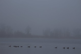 Foggy Morning- Creve Coeur Lake, St. Louis Co.
