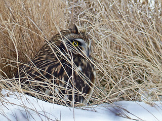 Hiding in the grasses