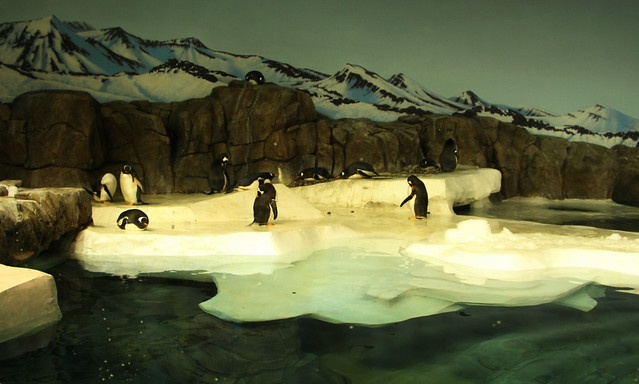 Great Zoo Exhibit: Helzberg Penguin Plaza