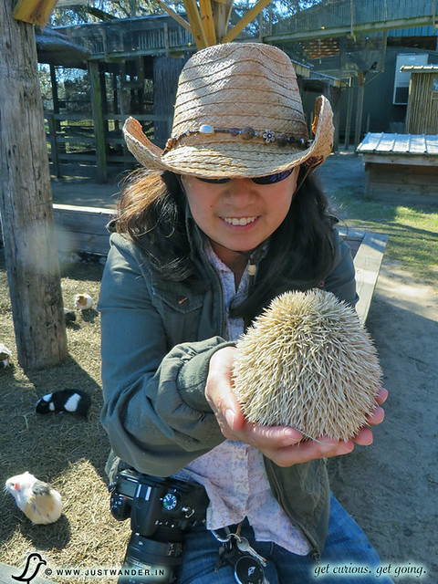 PIC: Holding a hedgehog at Giraffe Ranch
