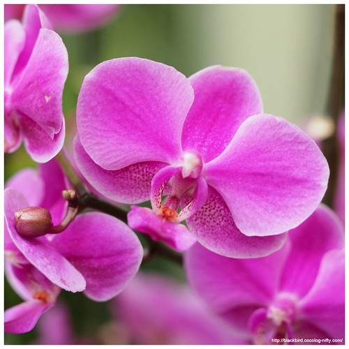 Orchid #09