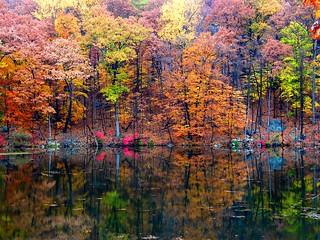 Heavenly Beautiful Autumn