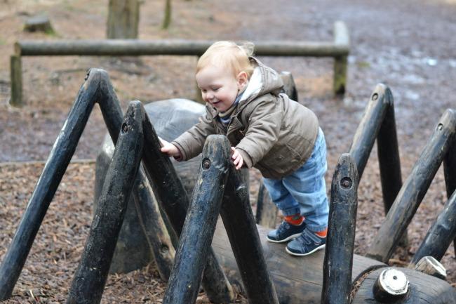 climbing_spider_woodland