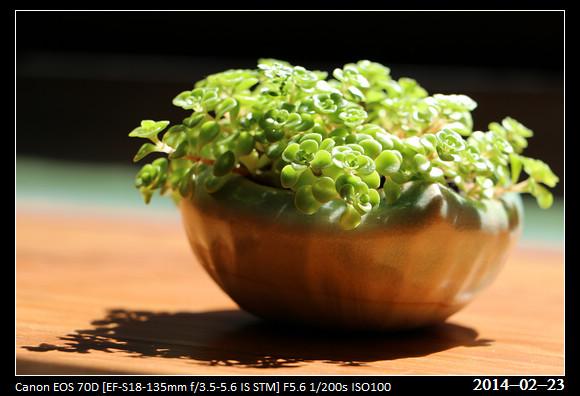20140223_Green