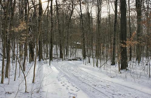 Dawes Arboretum: Cabin Path