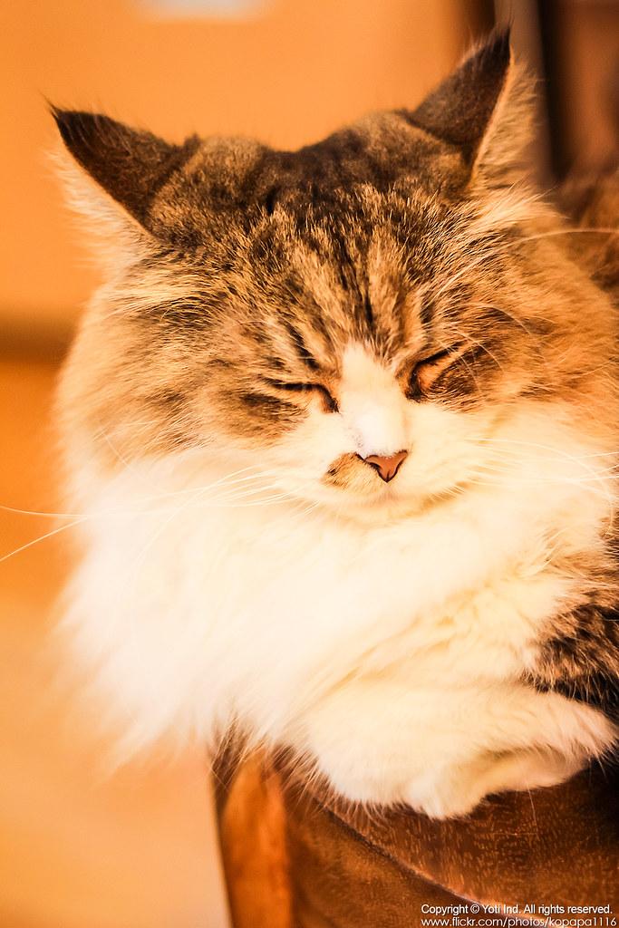 元氣貓主題餐廳 IMG_6125