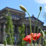 Plants in Preston