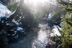 Winter 2013 (Jesmond Dene)  (19)