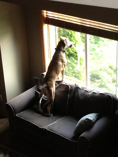 160_2013_jump_j9 by teach.eagle