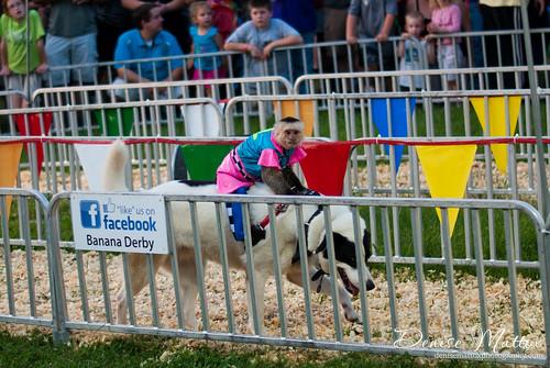 Wilson County Fair 2013