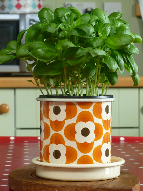 My birthday pot by Orla Kiely