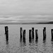 Old Pilings by baresilver