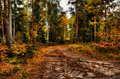 road wood autumn trees sunset red orange tree fall nature colors yellow pine night forest season landscape dawn woods afternoon sweden fallen dirtroad leafs a77 östergötland folden östergötlandcounty sony1650