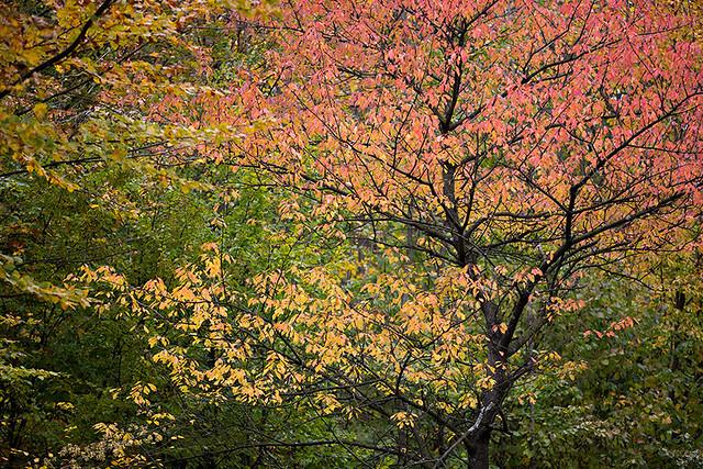 Colours of autumn in Austria.