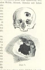 """British Library digitised image from page 317 of """"Die Insel Tenerife. Wanderungen im canarischen Hoch- und Tiefland ... Mit 4 Originalkarten und 33 Textbildern"""""""