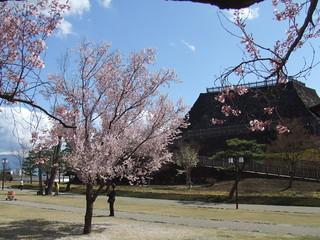 甲府城跡・桜