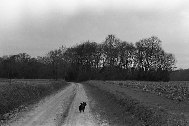 Dog Adventure, 2014