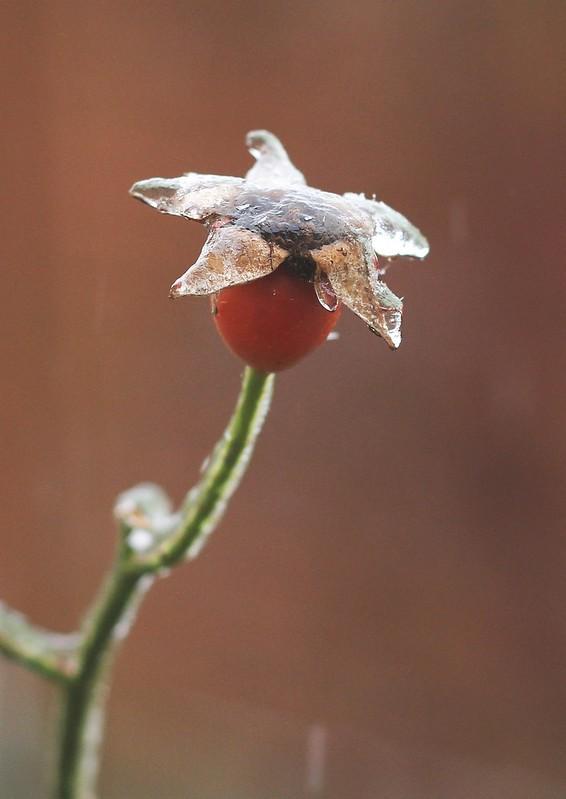 ❄ frost bite ❄ 3/13
