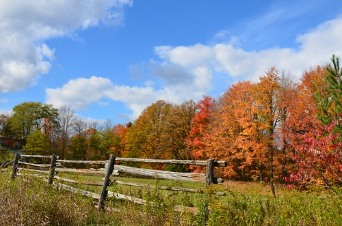 autumn sky ontario fall leaves clouds fence nikon day colours cloudy puffyclouds uxbridge oldfence sandford d7000 pwfall