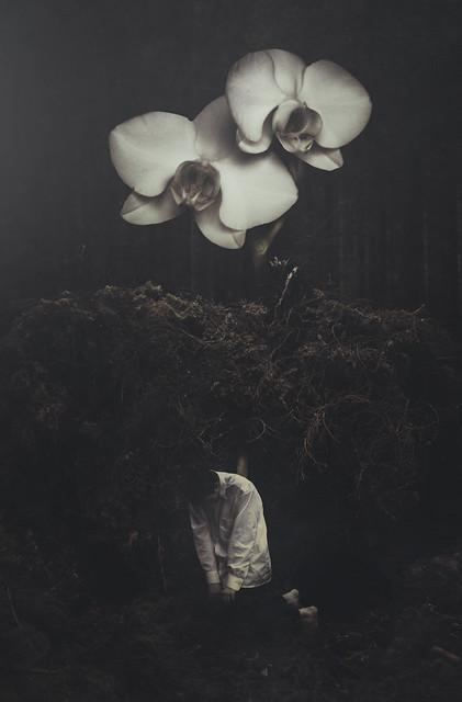 Albin Thelander - Seeds.