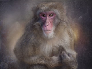 Snow Monkey Portrait