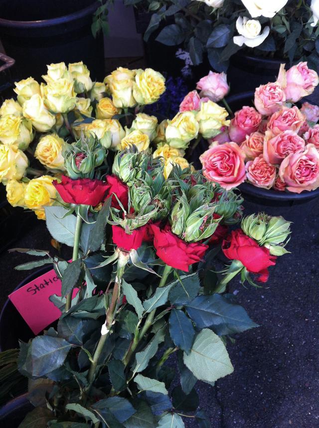 rive gauche garden rose