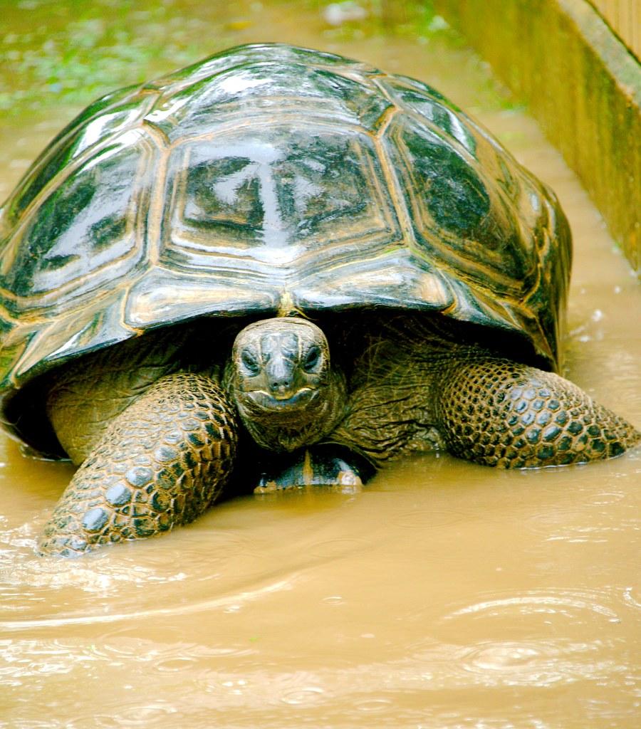 Tortoise_8